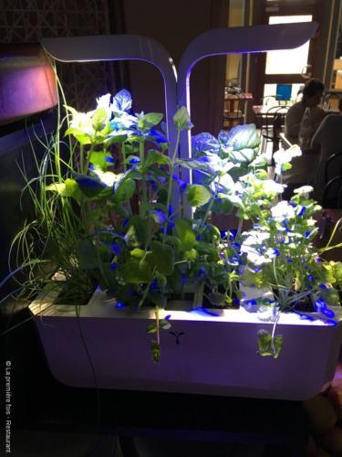 Des herbes aromatiques à portée de main